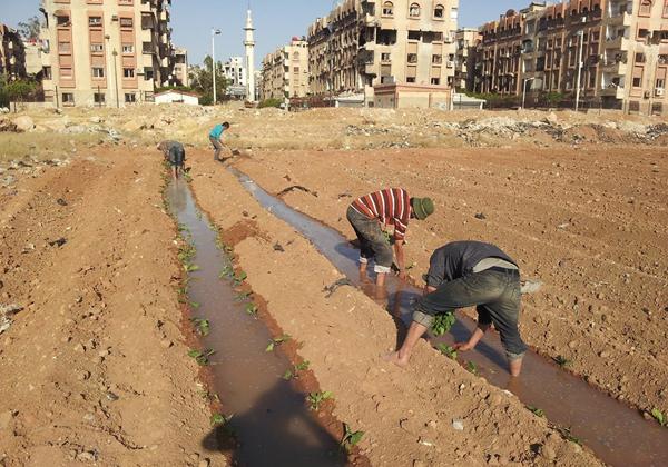 Landwirtschaftsinitiative im belagerten Yarmouk