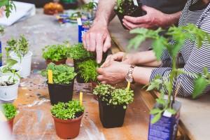 urban-gardening-16-von-101-300x200
